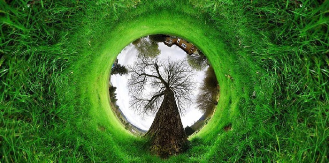 360-tunnel-tree-nature
