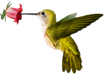 png_colibri_by_lg_design-d4wy9tq
